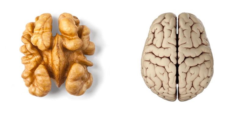 Walnuss ? Gehirn