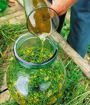 Aus Johanniskraut wird Öl.