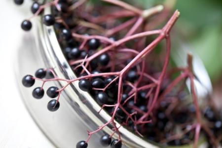 Gesunde Wildfrüchte: Hagebutte, Holunder und Co.