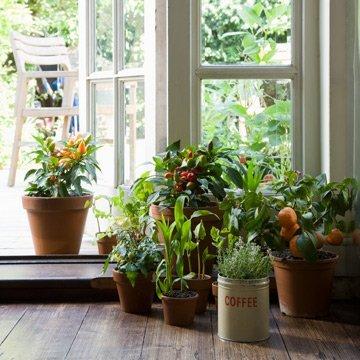 7 Gründe, warum wir mehr Pflanzen brauchen