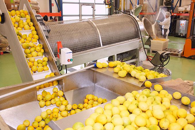 Zitronen auf dem Laufband