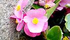 Mit Bach-Blüten die innere Balance finden