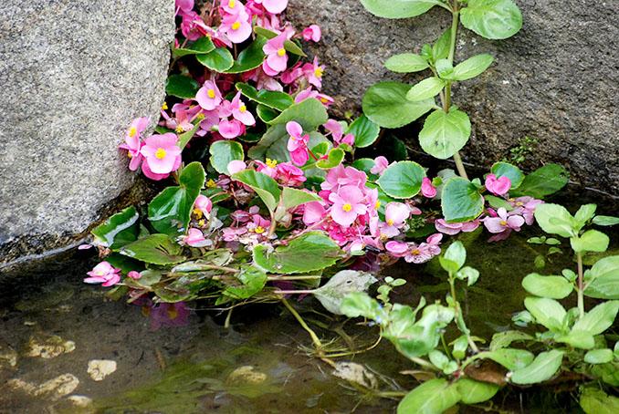 Gegen viele Probleme im Leben gibt es eine Blüte © Bernd Sterzl (pixelio.de)