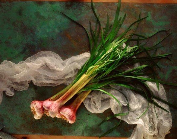 Knoblauch und Ingwer: Zwei wahrlich tolle Knollen