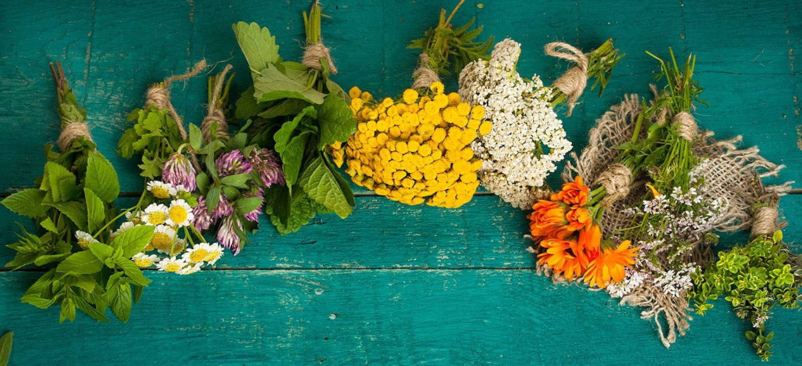 Die wichtigsten Heilpflanzen und ihre Wirkung