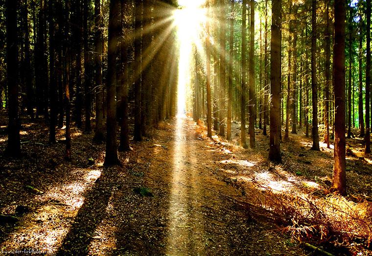 Wandern im Wald beruhigt Geist und Seele