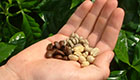 Kaffee und Tee: Ein rundum gesunder Genuss?