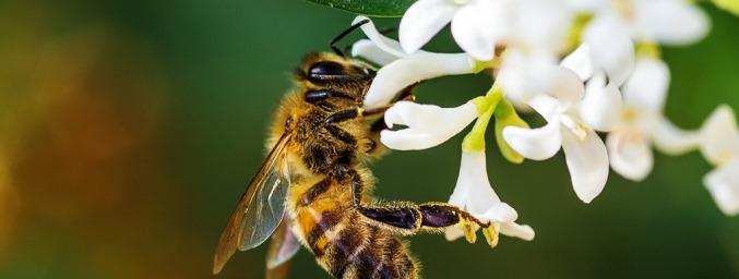 Neudorf Projekt schützt die Bienenvölker  Bild: Rene Albarus/pixelio.de