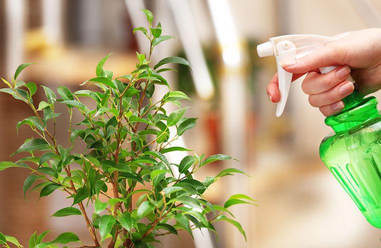 Besprühen Sie Ihre Pflanzen mit Brennesselsud.