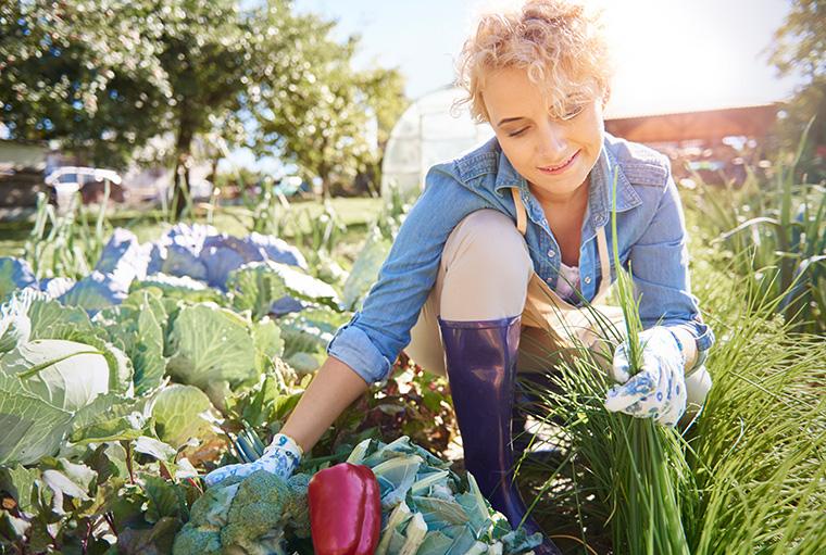 Torffreie Erde für den eigenen Gemüseanbau