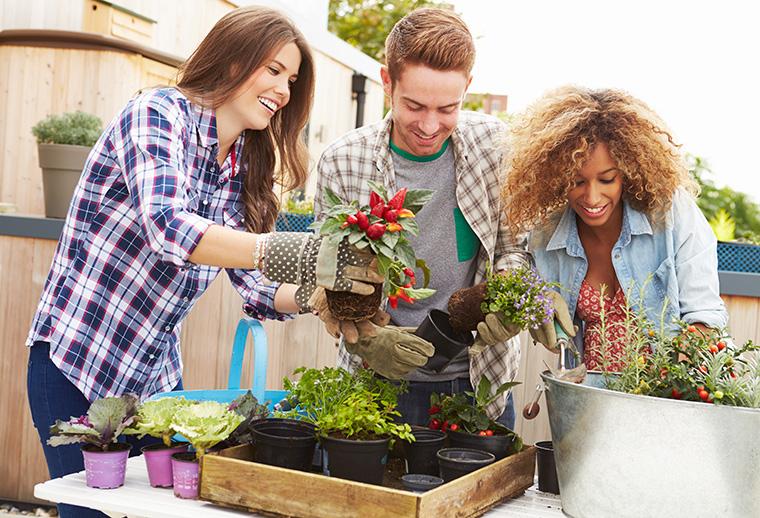 Welche Vorteile hat torffreie Blumenerde wirklich?