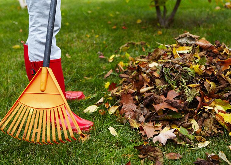 Richtige Rasenpflege im Herbst.
