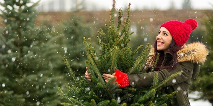Faire Weihnachtsbäume aus dem Baumarkt