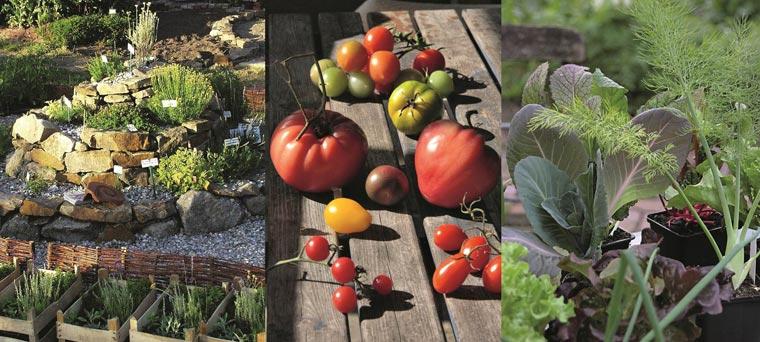 Pflanzenpakete für einen einfachen und platzsparenden Anbau