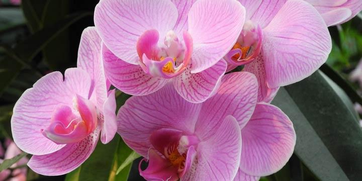 So bleibt die Orchidee frisch und gesund