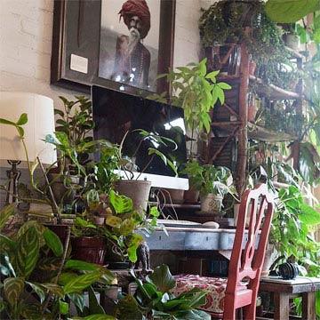 Indoor Jungle: Mach deine Wohnung zum Dschungel