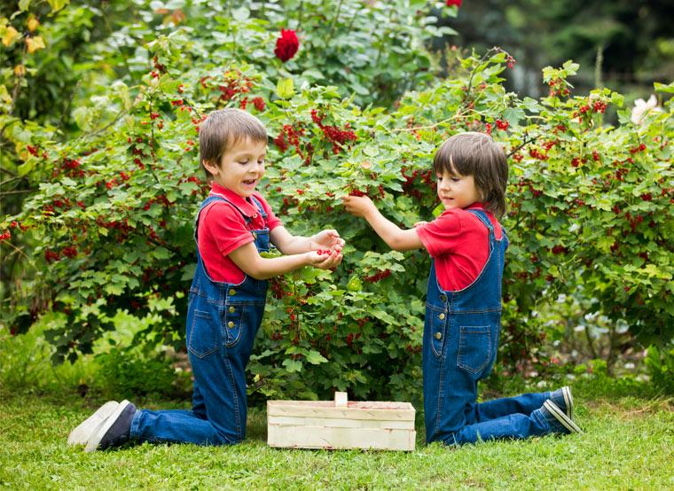 Toom Bio-Obst zum selbst anbauen