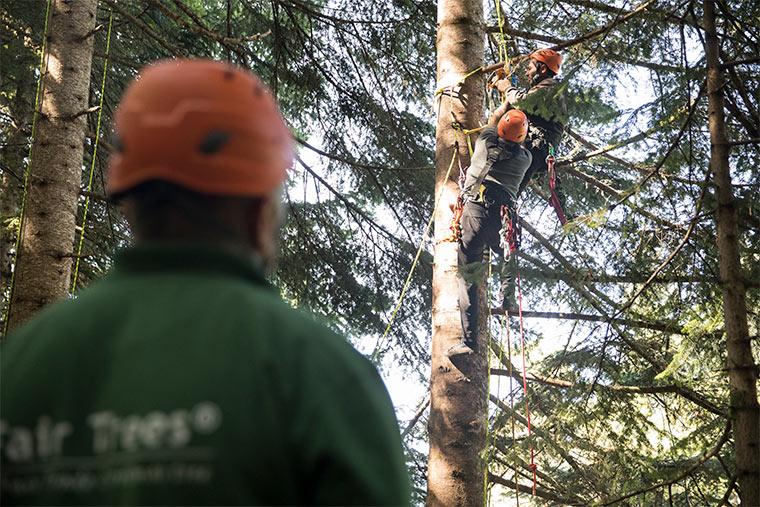 Fair Trees initiiert Kletterschulungen und stellt notwendige Sicherheitsausrüstungen
