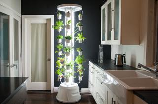 Selbstversorgung deluxe: Indoor-Gardening-System