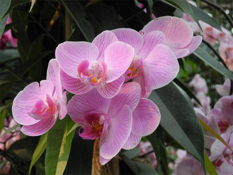 Orchideen sind beliebte Zimmerpflanzen
