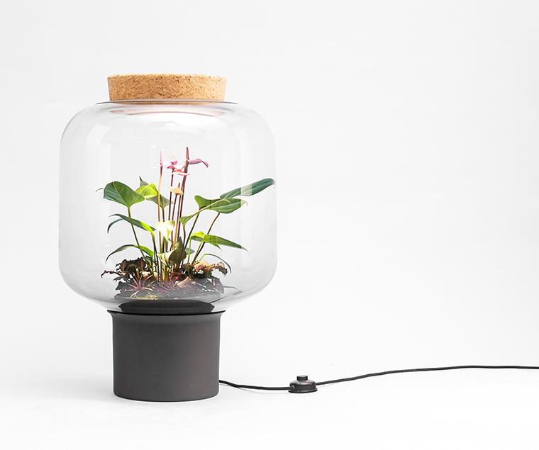 zimmerpflanzen die wenig licht brauchen die mygdal. Black Bedroom Furniture Sets. Home Design Ideas