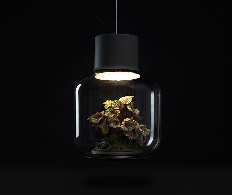 zimmerpflanzen die wenig licht brauchen die mygdal pflanzenlampe hilft. Black Bedroom Furniture Sets. Home Design Ideas