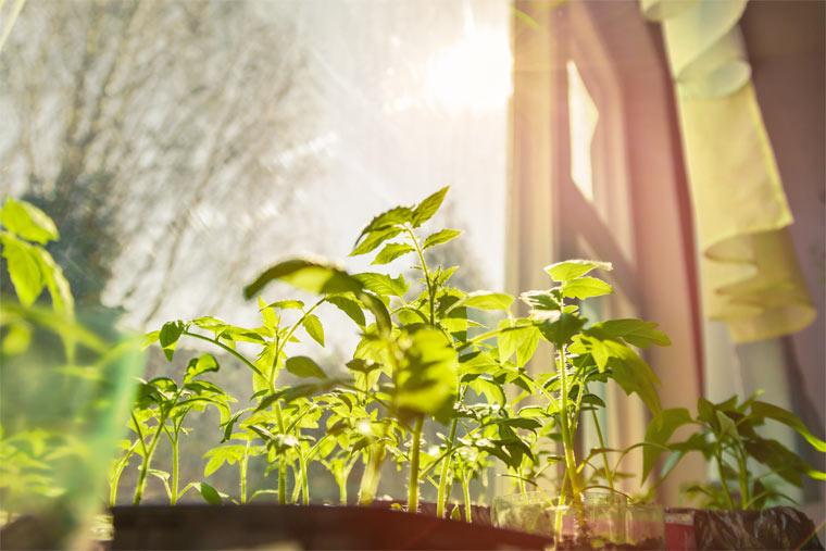 Licht ist für den gesunden Stoffwechsel der Pflanzen wesentlich