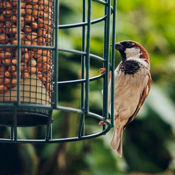 Vogelfutter selbstgemacht: Nachhaltig und günstig