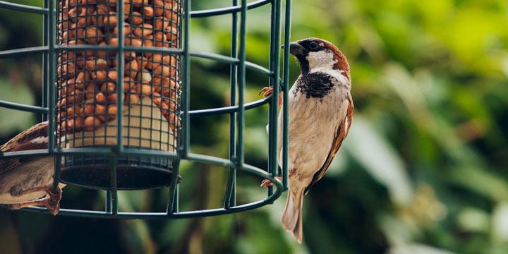 Nicht nur bei klirrender Kälte Vögel im Garten füttern