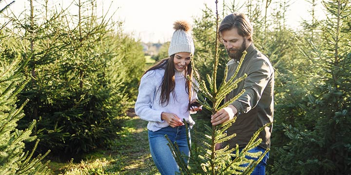 Weihnachtsbaum kaufen: Weniger Gift zum Fest mit einer Öko-Tanne