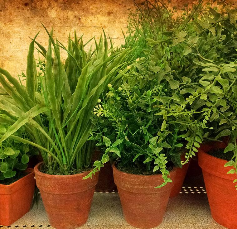 Natürliche Pflege von Zimmerpflanzen