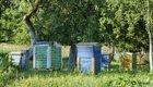 Die eigene Bienenzucht: Tipps für eine Bienenkiste