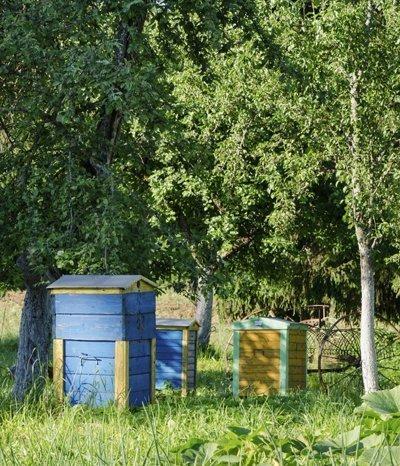Eine Bienenkiste selber bauen