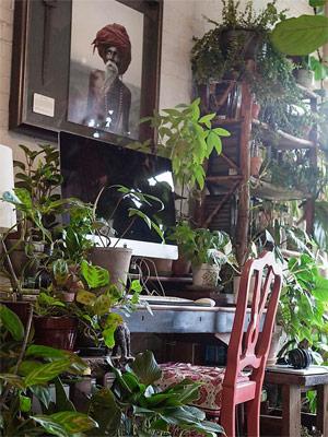 Indoor Jungle: Mach' deine Wohnung zum Dschungel!