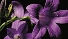 Schöne Blumen in Garten & auf Balkon: Immer mein Traumgarten