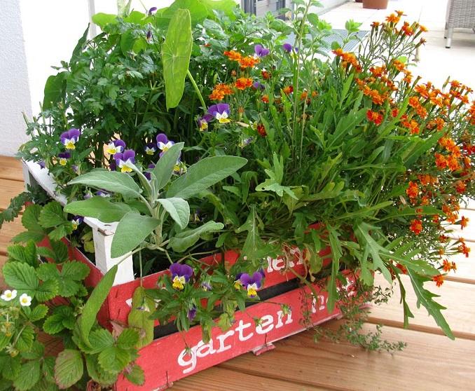 Prächtig Balkon Erdbeeren pflanzen Kräuter Salat Upcycling Weinkisten @WR_23