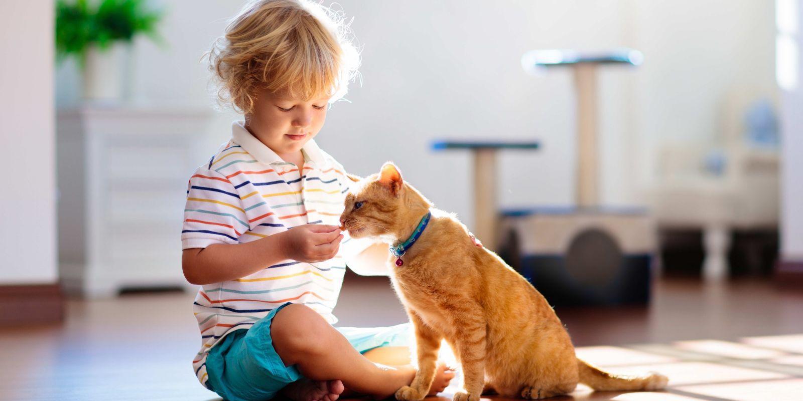 Auch Katzenfutter kann nachhaltig sein