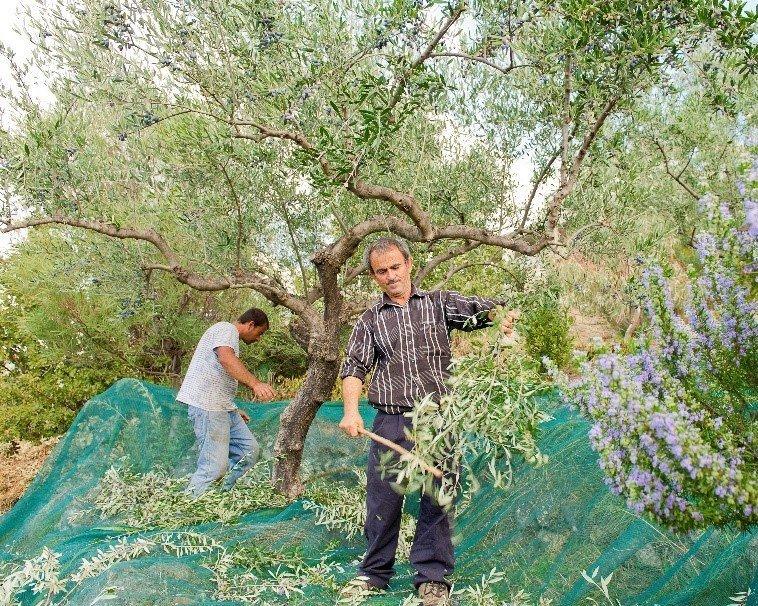 Faires Olivenöl