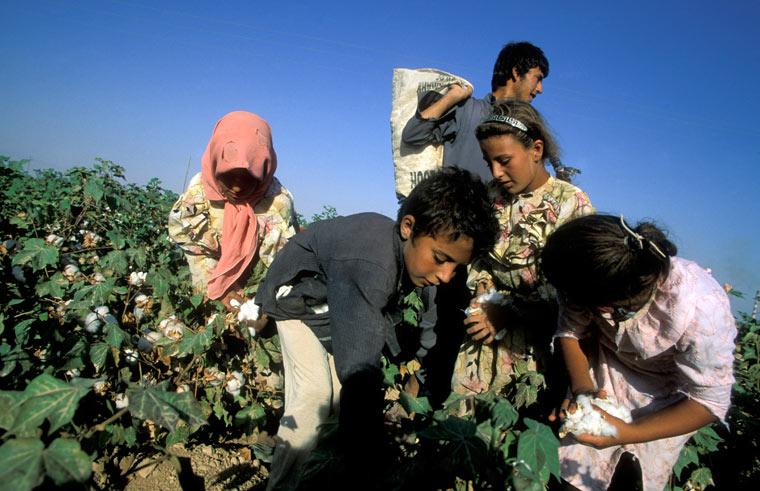 Der Baumwollanbau und die Folgen