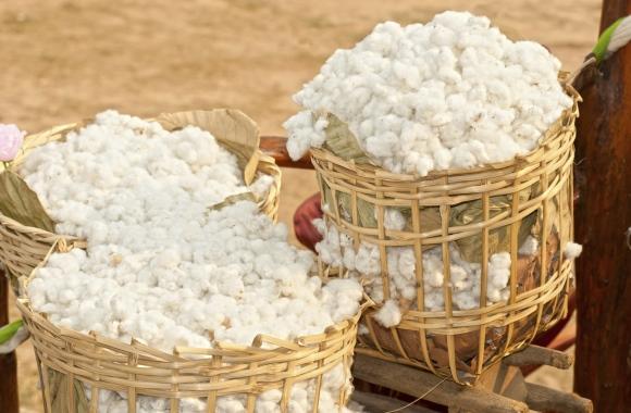 Fünf gute Gründe für Kleidung aus fairtrade Baumwolle
