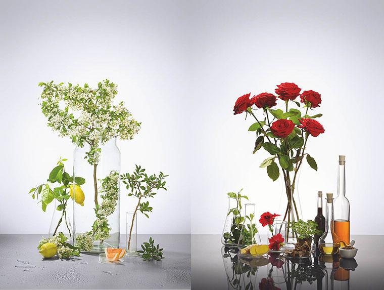 Rosen- und Zitrusduefte steigern das Wohlbefinden
