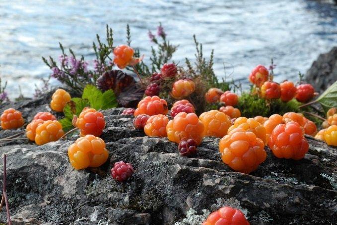 Nordischer Online-Shop Hilla: Beste Naturkosmetik aus Skandinavien