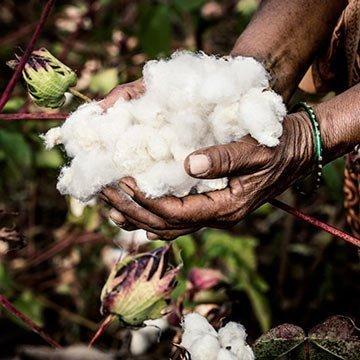 Bald nur noch nachhaltige Baumwolle!