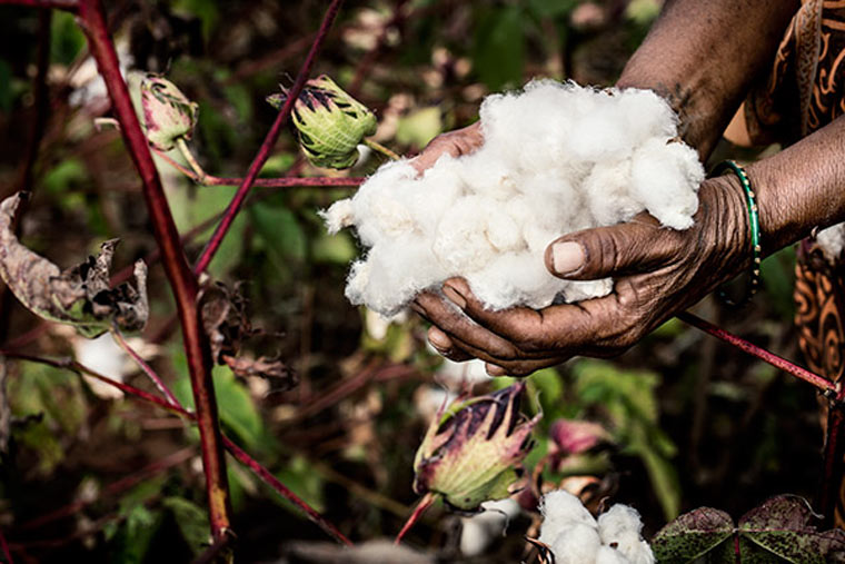 Bald nur noch nachhaltige Baumwolle