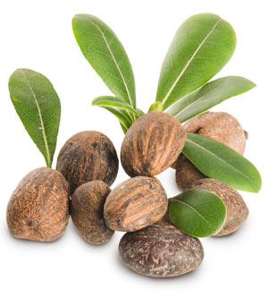 Sheabutter wird aus den Früchten des Karité-Baumes gewonnen