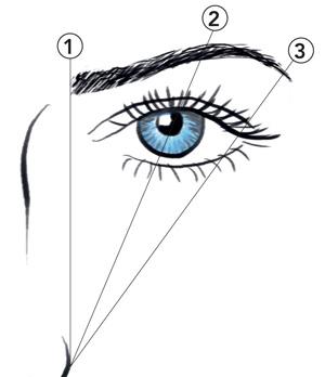 Die Augenbraue steigt zu 2/3 an, zu 1/3 fällt sie wieder