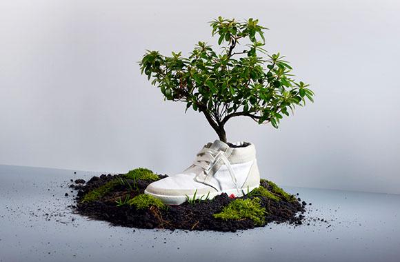 Kompostierbare Sneaker: Aus alten Schuhen werden schöne Pflanzen