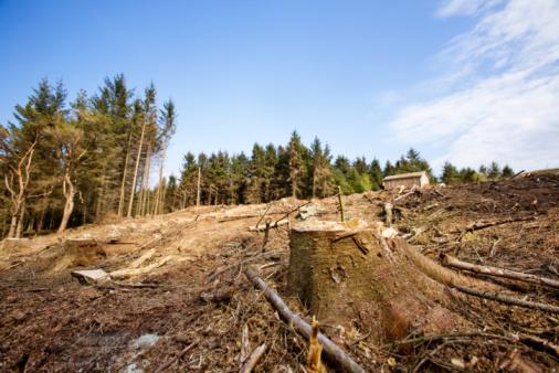 Bannwälder werden gerodet