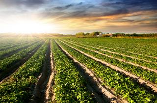 Bis 2. Mai 2017 Zukunft der Agrarpolitik mitbestimmen!