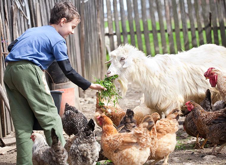 So können auch Kinder den Ablauf auf dem Biobauernhof kennenlernen.